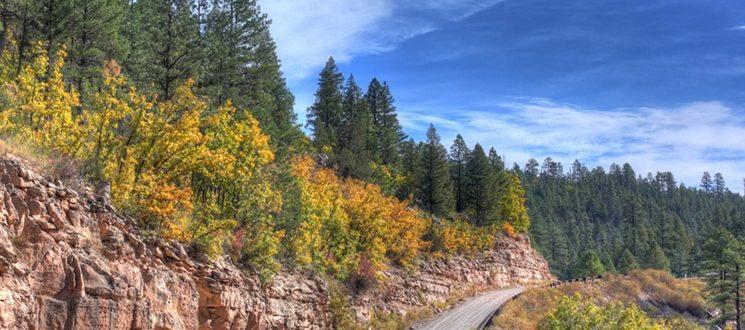 fall leaves in arizona